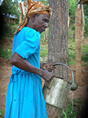 woman of the green belt movement watering trees
